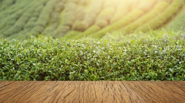 Mikroklima İklim Nedir / Türkiye'de Hangi Tarım Ürünleri Mikroklima Alanda Yetişir 1