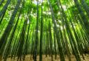 Türkiye'de Ormancılık (Özet)