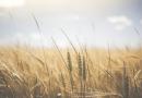 Türkiye'de Tarım ve Tarımı Etkileyen Faktörler